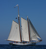 Colgate WA Trip on the Spirit of South Carolina Schooner :